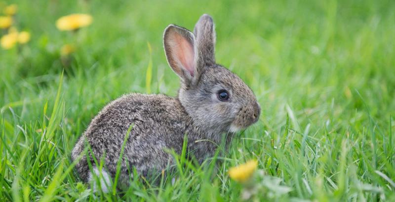 magliano-in-toscana-agriturismo-animali-della-fattoria,conigli